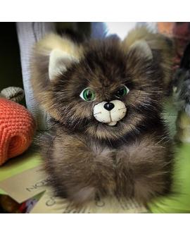Котенок Соболь
